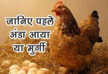 पहले अंडा आया या मुर्गी